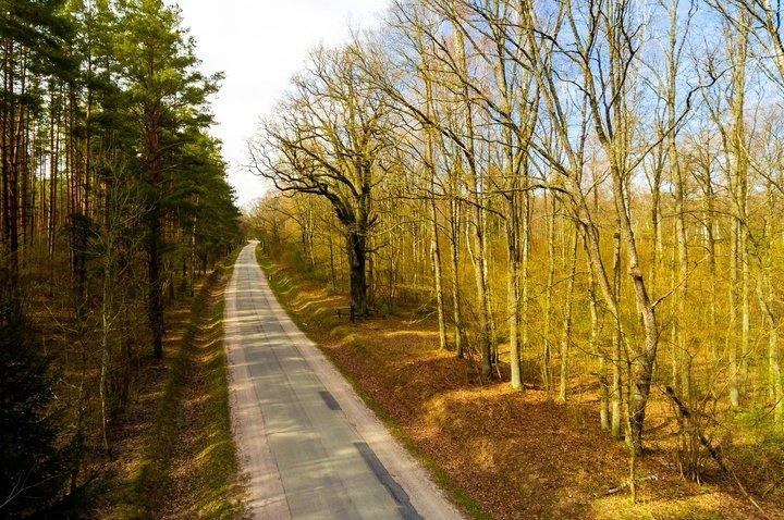 Great Oak of Širvintas