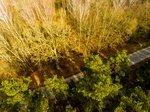 Дуплистый Ширвинтский дуб
